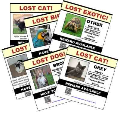 lost pet posters free missing pet poster template cat dog pet