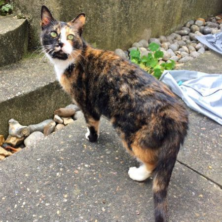 Found Unknown - Other Cats in Manor House