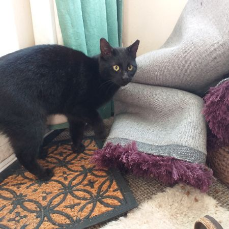 Found Domestic Short Hair Cats in Budby