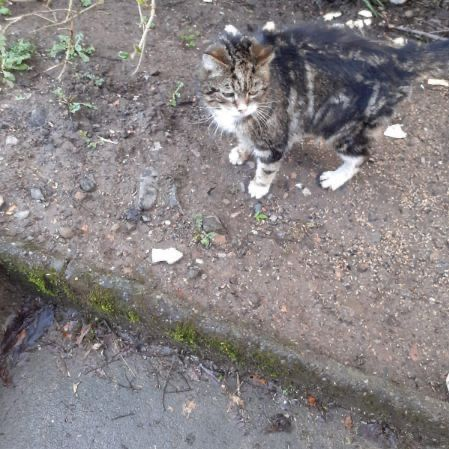 Found Tabby Cats in Stirling
