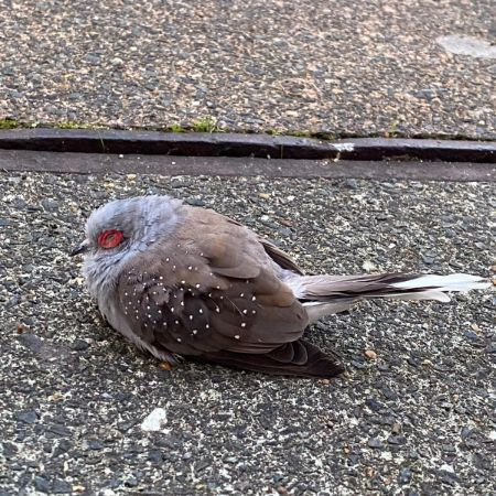 Found Unknown - Other Birds in Isle Of Dogs