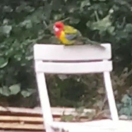 Found Parrot, Parakeet Birds in Unknown