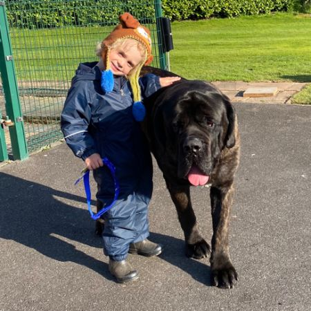 Missing Mastiff Dogs in Doncaster