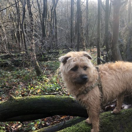 Missing Terrier Dogs in Burwash