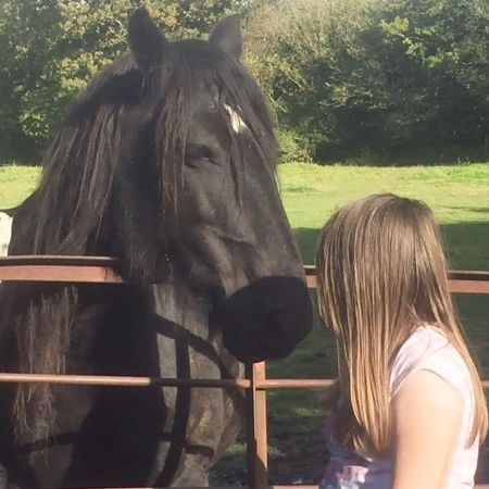 Missing Pony Horses in Llanelli