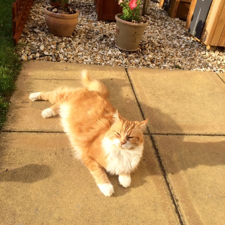 Missing Semi-Long Hair Cats in Sidbury