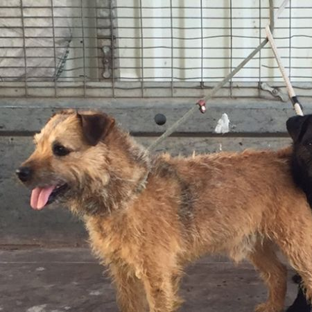 Missing Terrier Dogs in Uttoxeter