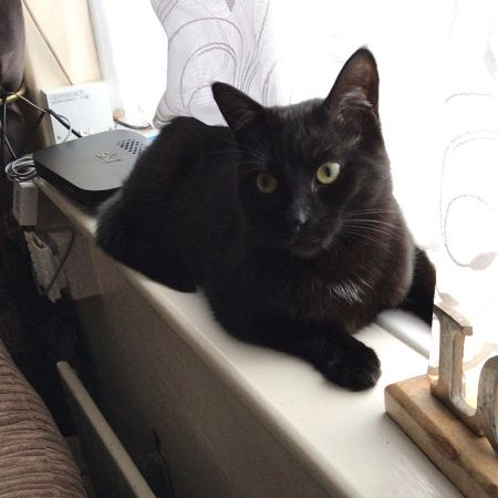 Missing Domestic Short Hair Cats in Camberley
