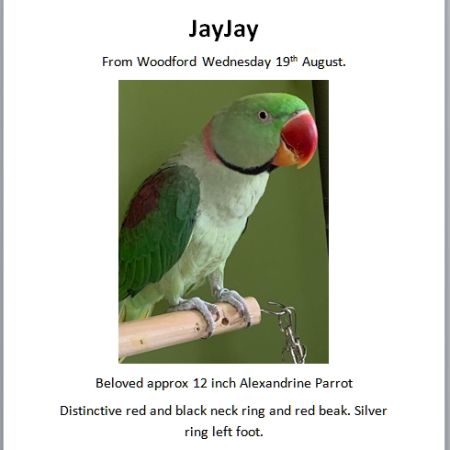 Missing Parrot, Parakeet Birds in Woodford, Kettering
