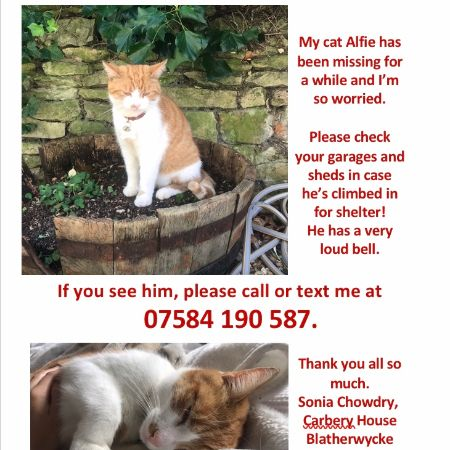 Missing Domestic Short Hair Cats in Corby