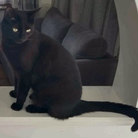 Missing Domestic Short Hair Cats in Lutterworth