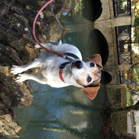 Missing Jack Russell Dogs in Castle Combe