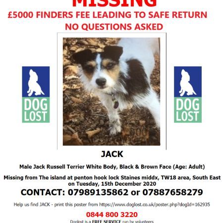 Missing Jack Russell Dogs in Staines