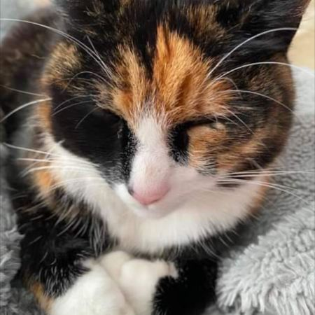Missing Tortoiseshell Cats in Moston/ Manchester