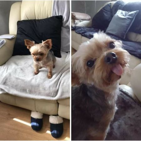 Missing Terrier Dogs in Cardiff